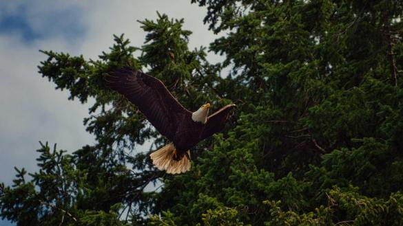 Two eagles, a cedar and a vine: Ezekiel 17 (13 September 2020)