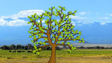 Africa prayer tree