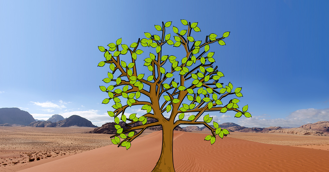 Middle East prayer tree