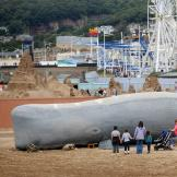 Banned whale beached at Weston-super-Mare